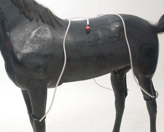 Система охлаждения лошади с помощью воды